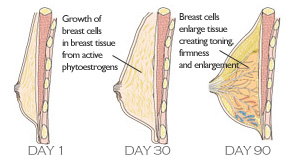 How to naturally grow breast